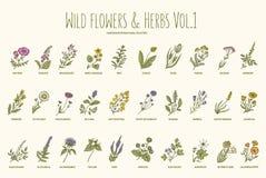 Grupo tirado mão das flores selvagens e das ervas Volume 1 Ilustração do vetor do vintage ilustração royalty free