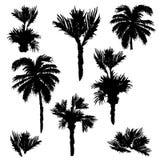 Grupo tirado mão das palmeiras ilustração do vetor