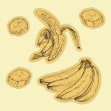 Grupo tirado mão de banana etiquetas ilustração stock