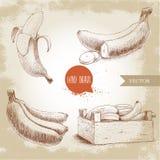 Grupo tirado mão de bananas maduras frescas Fotografia de Stock