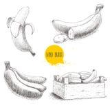 Grupo tirado mão de bananas maduras frescas Fotografia de Stock Royalty Free