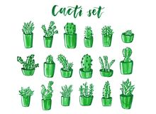 Grupo tirado mão do cacto e da planta carnuda Flores da garatuja em uns potenciômetros plantas bonitos coloridas do interior da c Foto de Stock Royalty Free