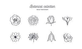 Grupo tirado mão do vetor de flores selvagens Rosas, peônia, anêmona e outro Rabiscar a ilustração botânica do estilo ilustração stock