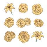 Grupo tirado mão do vetor de rosa, de lírio, de peônia e de chrysanthe do amarelo fotografia de stock