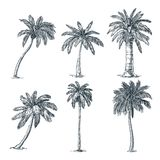 Grupo tropical das palmeiras do coco Ilustra??o do esbo?o do vetor Plantas tropicais e elementos tirados mão do design floral ilustração stock