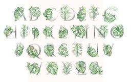 Grupo tropical de prata do alfabeto da aquarela de leeters com ilustrações verdes das folhas imagem de stock