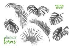 Grupo tropical do monochrome das folhas do vetor isolado Imagem de Stock