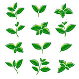 Grupo verde da coleção da folha de chá Vetor ilustração stock