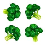 Grupo verde do ícone dos brócolis, estilo isométrico ilustração royalty free