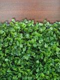 Grupo verde falsificado da folha na madeira de Brown imagem de stock royalty free