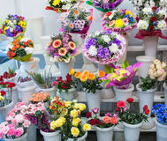 grupos da flor azul amarela branca cor-de-rosa e grande vermelha cor-de-rosa alaranjada fresca grande da camomila do gerbera do c Imagem de Stock