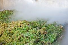 Grupos da uva branca processados com nitrogênio Fotos de Stock