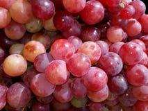 Grupos da uva cor-de-rosa fresca fotografia de stock royalty free