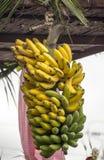 Grupos das bananas imagens de stock