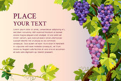 Grupos das uvas Foto de Stock Royalty Free