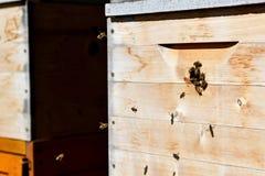 Grupos de abelhas imagens de stock