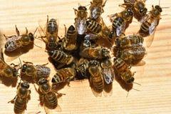 Grupos de abelhas imagens de stock royalty free