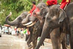 Grupos de elefantes que bailan en el festival de Songkran en Tailandia. Imagen de archivo libre de regalías