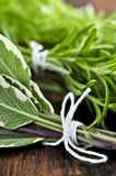 Grupos de ervas frescas Fotos de Stock