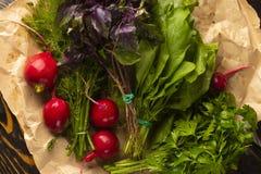 Grupos de ervas frescas da salsa, do aneto, da manjericão, do rabanete e do sorre Fotos de Stock Royalty Free