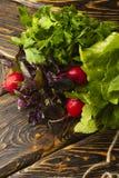 Grupos de ervas frescas da salsa, do aneto, da manjericão, do rabanete e do sorre Fotografia de Stock