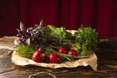 Grupos de ervas frescas da salsa, do aneto, da manjericão, do rabanete e do sorre Imagens de Stock