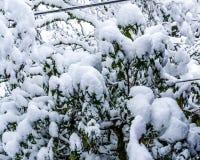 Grupos de extracto de la nieve foto de archivo