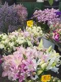 Grupos de flores Fotografia de Stock Royalty Free