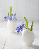 Grupos de flores adiantadas da mola Imagens de Stock