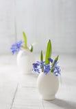 Grupos de flores adiantadas da mola Imagens de Stock Royalty Free