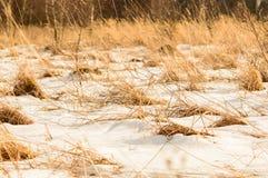 Grupos de hierba cubiertos con la nieve, clima duro Foto de archivo