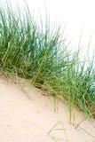 Grupos de hierba del mar foto de archivo libre de regalías