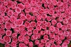 Grupos de rosas cor-de-rosa Foto de Stock Royalty Free