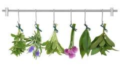 Grupos de secagem da erva Fotos de Stock