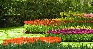 Grupos de tulipanes fotos de archivo libres de regalías
