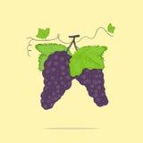 Grupos de uvas Imagem de Stock Royalty Free