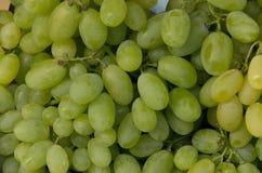 Grupos de uvas brancas frescas Fotografia de Stock Royalty Free