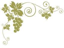 Grupos de uvas e de folhas ilustração stock