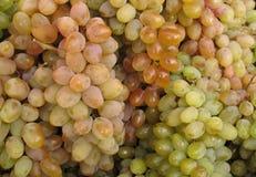 Grupos de uvas maduros Imagens de Stock