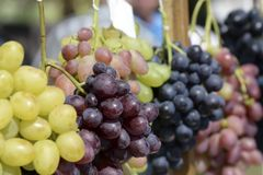 Grupos de uvas de variedades diferentes, close-up Imagem de Stock