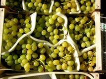 Grupos de uvas verdes orgânicas em uns recipientes no mercado Fotografia de Stock Royalty Free