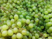 Grupos de uvas verdes Uvas verdes suculentas Textura com uvas fotografia de stock