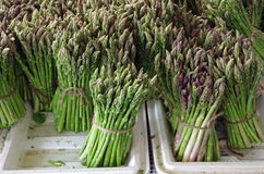 Grupos do aspargo fresco verde nas bandejas Fotos de Stock Royalty Free