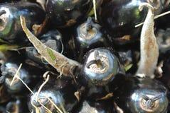 Grupos do fruto de óleo da palma da opinião do close-up nas árvores do óleo de palma Imagens de Stock