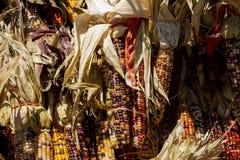Grupos do milho indiano unidos imagem de stock