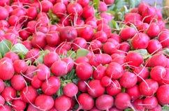 Grupos do rabanete redondo vermelho fresco na exposição fotos de stock