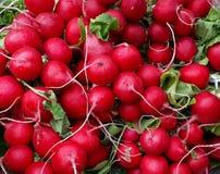 Grupos do rabanete vermelho fresco fotografia de stock royalty free