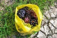 Grupos maduros de uvas verdes e pretas no saco Fotos de Stock Royalty Free