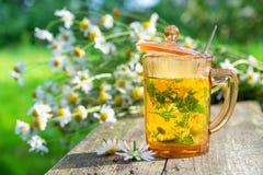 Grupos medicinais saudáveis das ervas do copo e da margarida de tisana fotos de stock