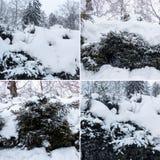 Grupos polvilhados com a neve contra um céu azul claro Lan do inverno fotos de stock royalty free
